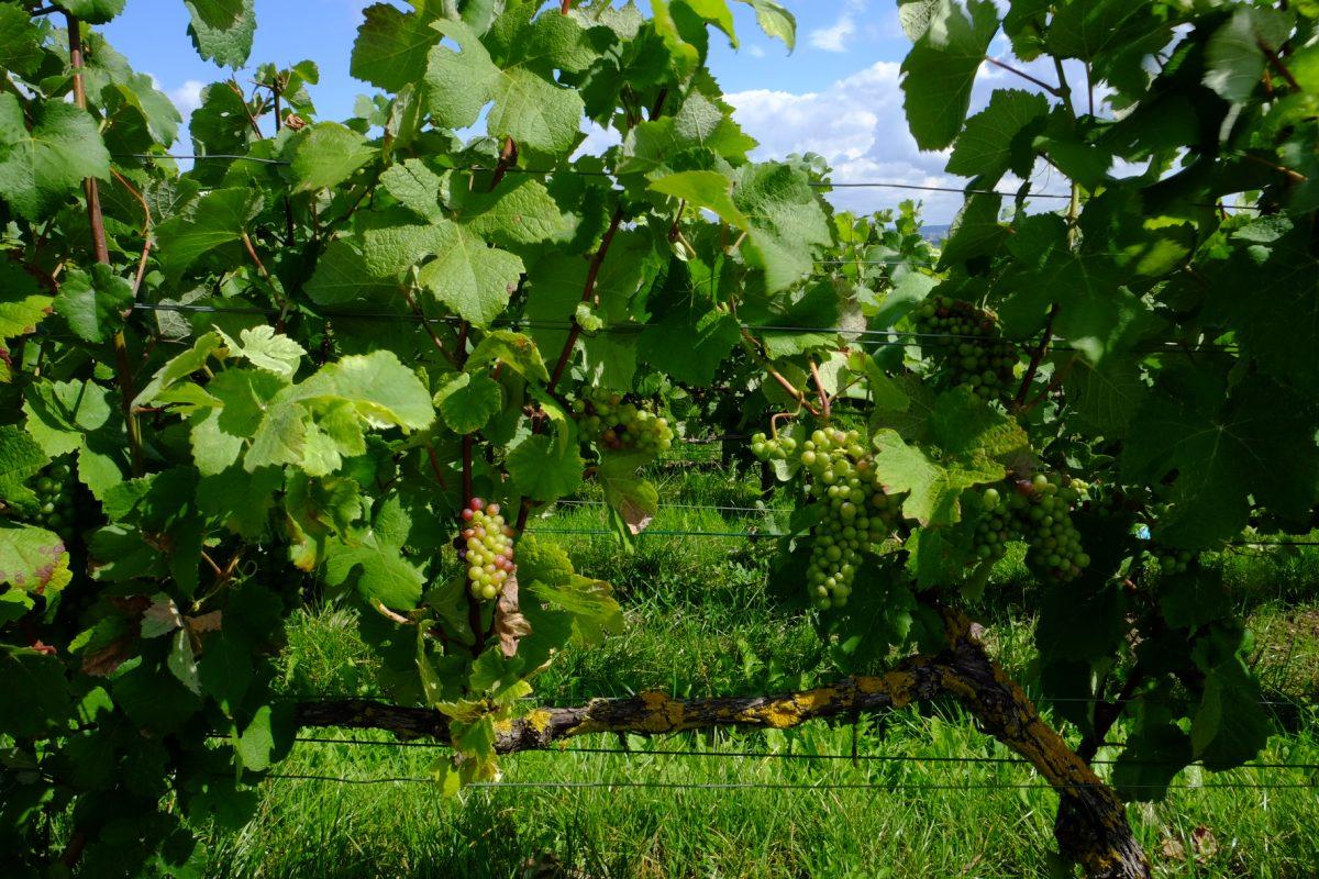 Vakantiewoning Champagne Ardennen Argonnen Imecourt Epernay